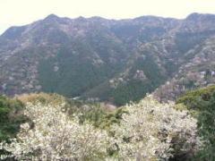 松下亭から見る山桜